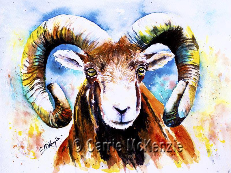 ram painting, ram watercolour, art, sheep, rams,