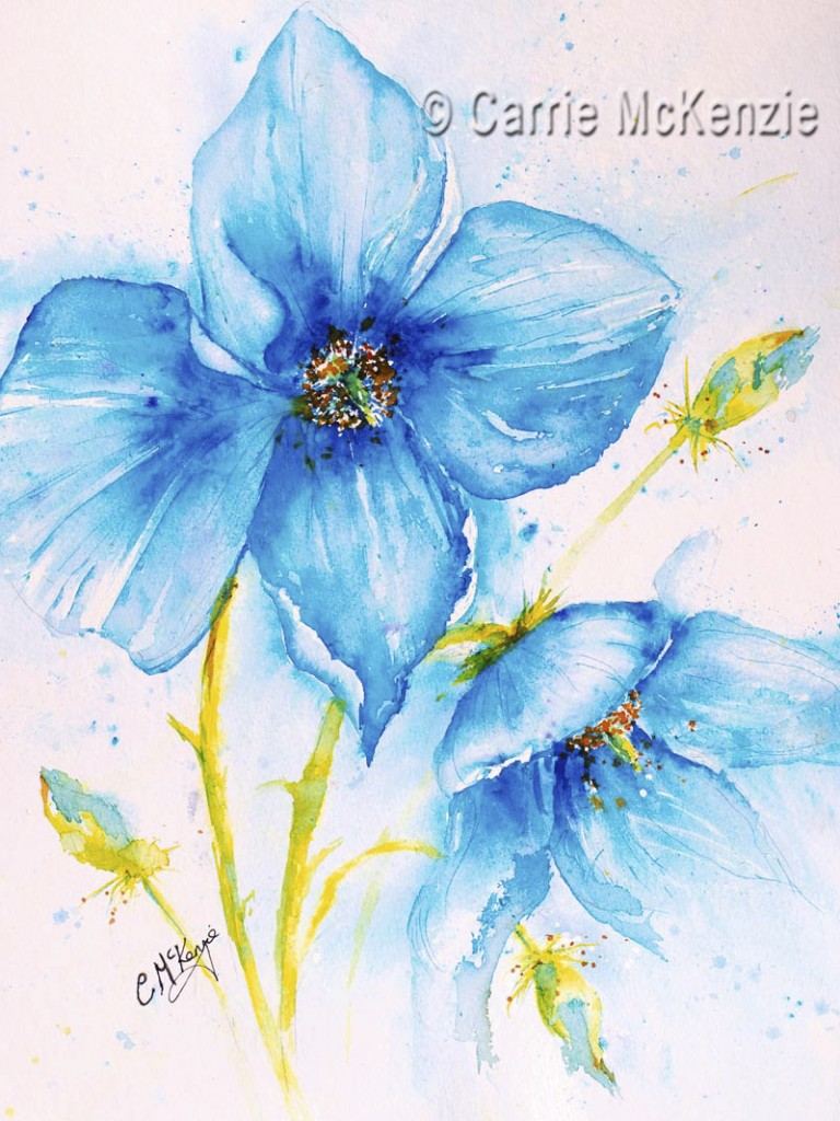 Meconopsis Flower Painting