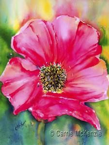 Red-poppy-16x12