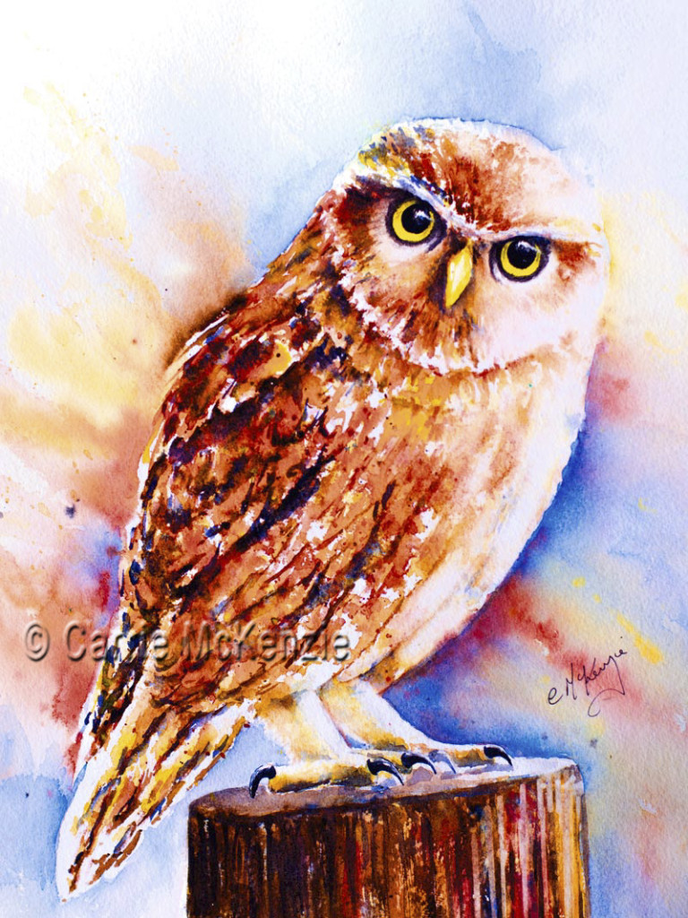 little owl painting, watercolour, art
