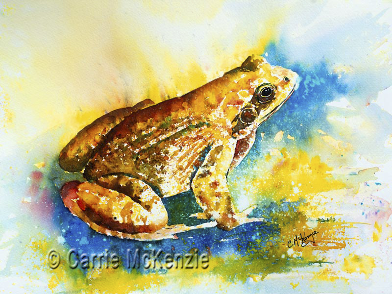 FREDDY FROG, frog painting, frog art, toad painting, toad art, frog, toad, wildlife painting, wildlife art, wildlife