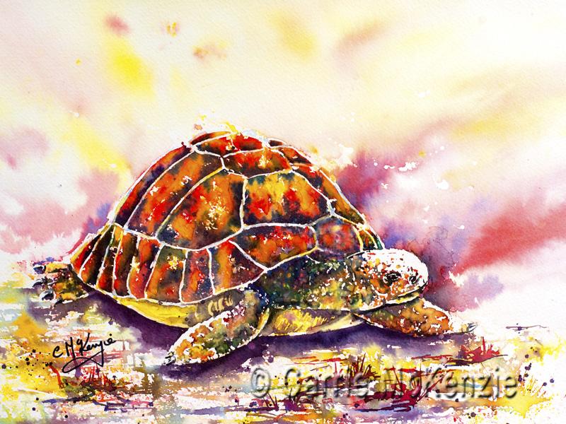 TOTOISE, tortoise painting, tortoise art, art, painting, nature, wildlife