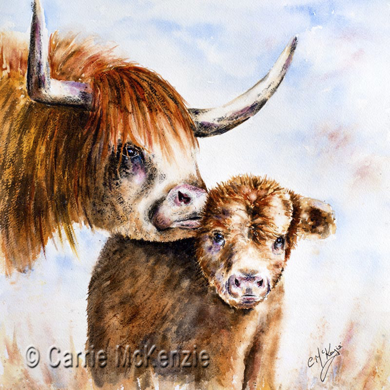 highland cow, highland cattle, highland cow and calf, highland calf, wildlife, nature, animals, highland cow painting, highland cow watercolour, baby highland cowhighland cow art,