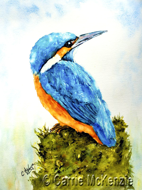 kingfisher poised, kingfisher, river, water, countryside nature, fish, bird