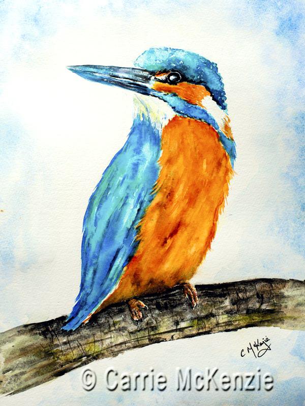 kingfisher, kingfisher WATCHFUL, bird, fish, water, river, countryside, nature,