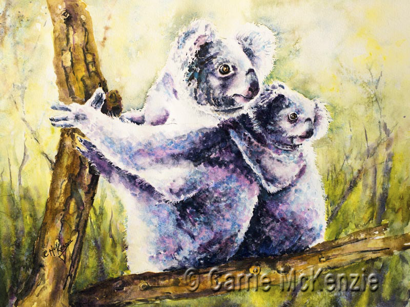 koalas, wildlife, australia, animal, koala