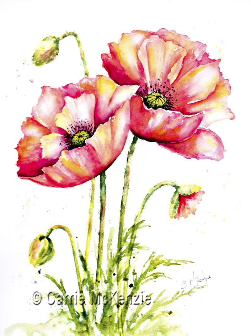poppy, poppies, remembrance, remembrance poppies, flower, nature, garden