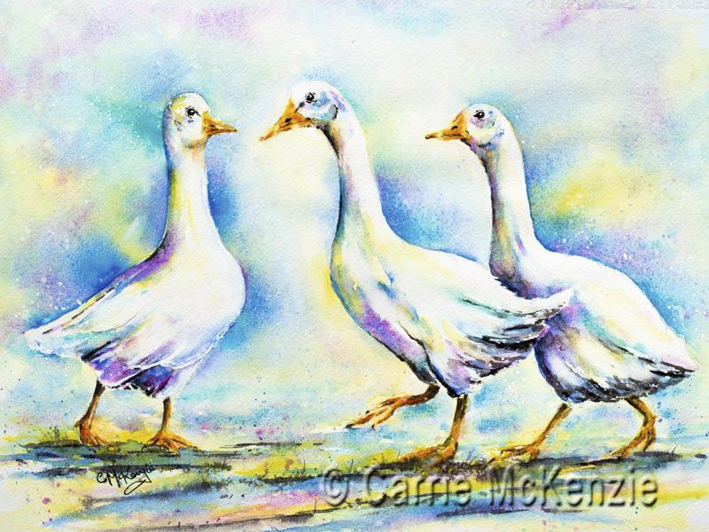 goose, geese, birds, wildlife, nature