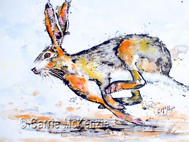 HARE, rabbit, animal, wildlife, running hare